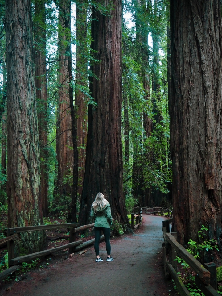 Day trip to Muir Woods