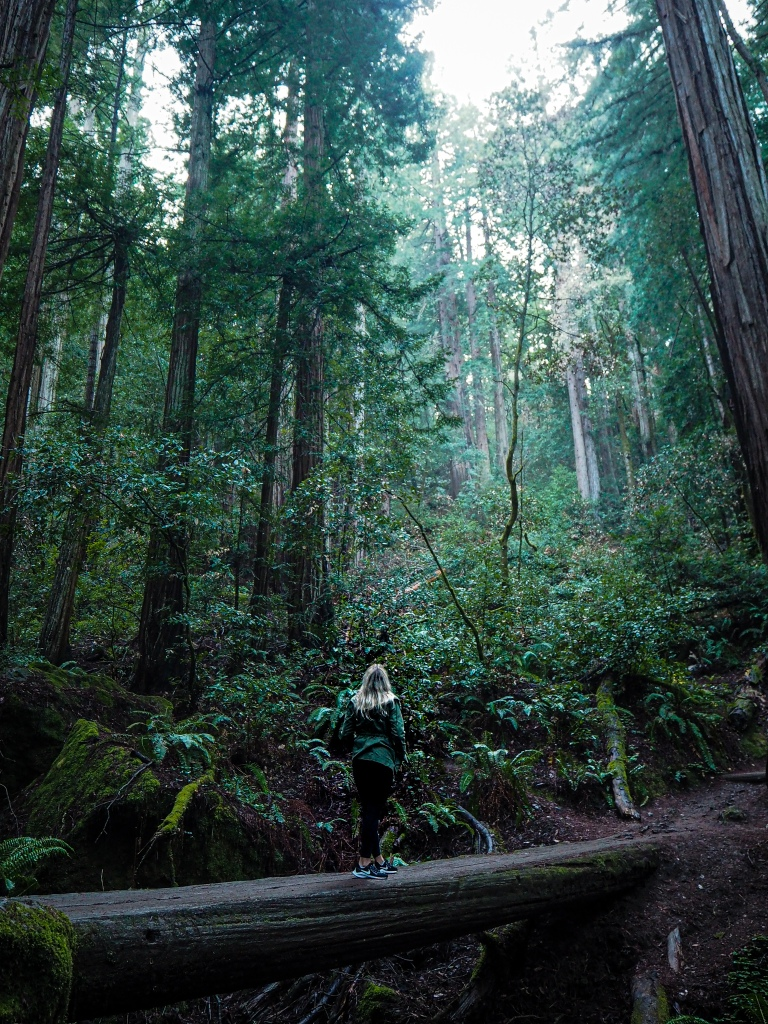 Mui Woods punapuumetsä